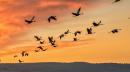 מה שרואים ממעוף הציפור