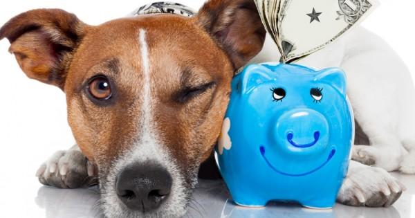 כמה כסף אנו מוציאים על חיות המחמד מדי שנה?