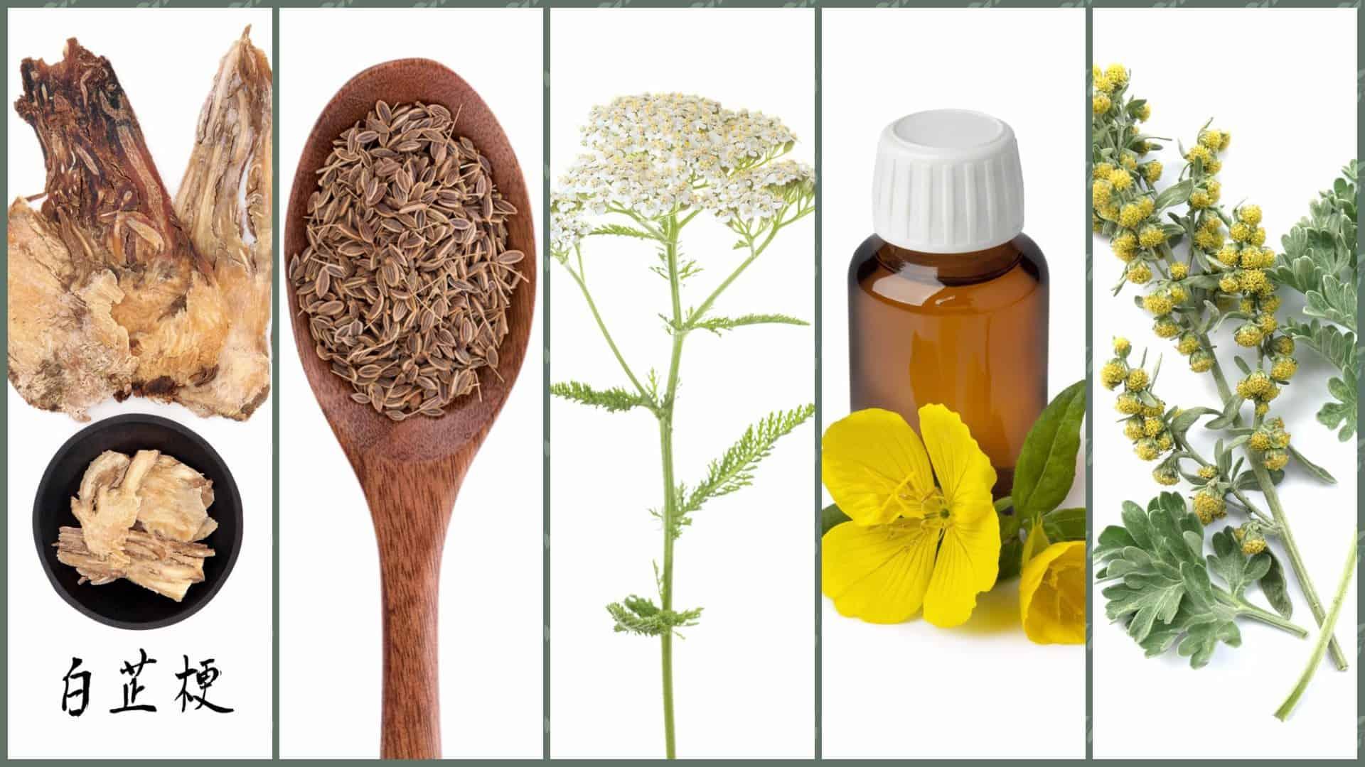 צמחי מרפא לכאבי מחזור
