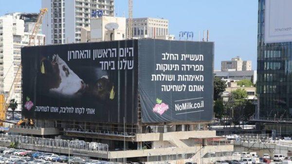 הקמפיין להימנעות ממוצרי חלב בשבועות
