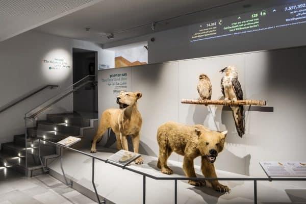 דב, אריה, אזניה ופרס. מוזיאון הטבע. צילום: איתי בנית