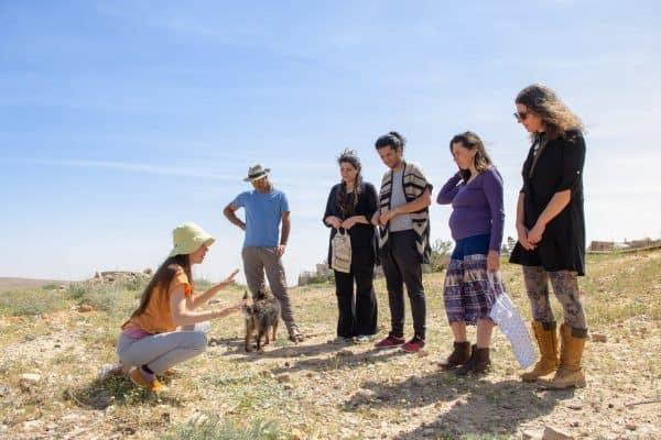 יונת מדבר - סיור בעקבות צמחי המרפא בערד. צילום: יוני גרינצר