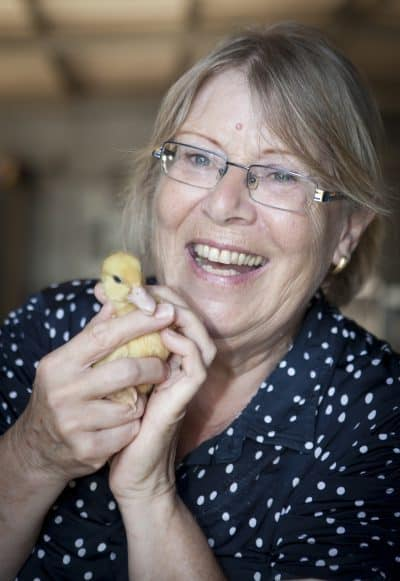 הילמה שמושקוביץ, יור אגודת צער בעלי חיים בהתנדבות מלאה כבר כמעט 40 שנה. 1