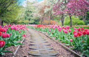 כך תהפכי את הגינה הפרטית שלך לגן עדן