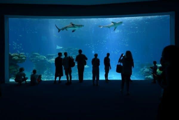כרישים במצפה התת ימי צלם בועז סמוראי