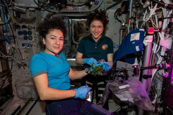 """עם כרסטינה קוך במהלך ניסוי לגידול חרדל בחלל צילום נאס""""א"""
